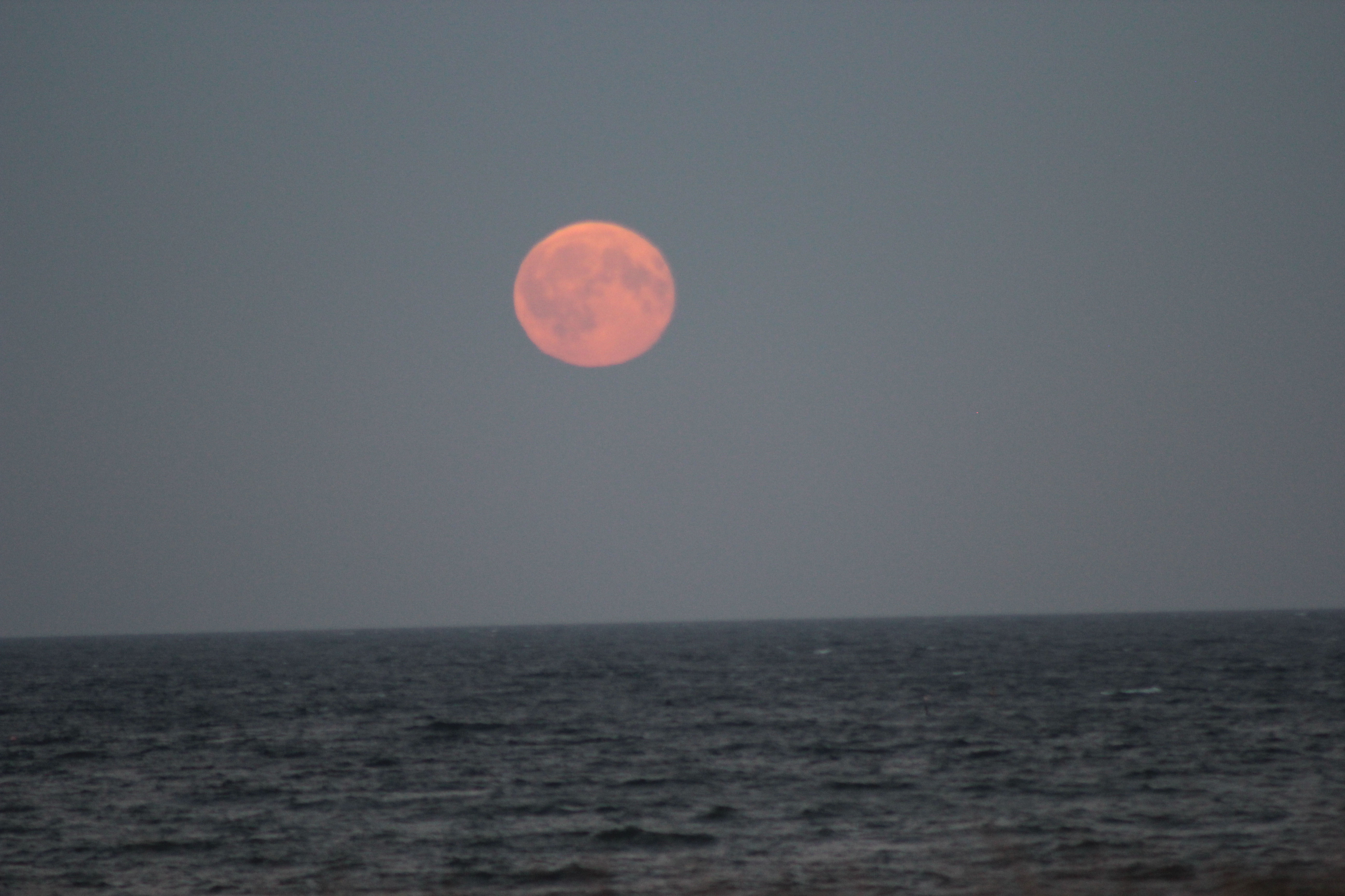 "Moonrise over the sea by Pam Foster. 18th Augus 2016 20.49. Canon EOS-600D f/6: 1/200 second ISO-800.  ""Some of you know that I have been trying (for years!) to get a photo of the moon as it rises from the sea - well, I finally got as close as its possible to get, I think. Photos were taken from East Haven on Thursday night (18th August).  Phew, another project completed!!""...Pam"